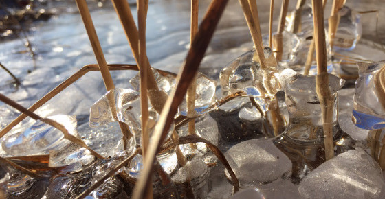 A poem: The ice, five parts